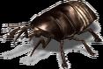 FOT Roacher