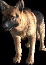 James de perro