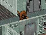 Дар (Fallout 2)