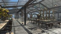 FO4 Graygarden Interior Greenhouse