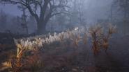 FO76 Halloween fright farm 05