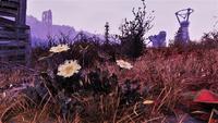FO76 Flora Cran Bog 13