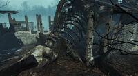 Oceanarium-Skeleton-FarHarbor