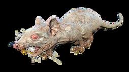 FO4NW Rad-rat1.png