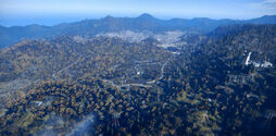Forest-Fallout76.jpg