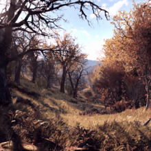 Forest-E3-Fallout76.png
