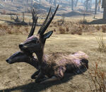 Gazelle2-NukaWorld.jpg