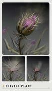 FO4 Art Book thistle plant