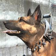 FO4 Усиленный собачий ошейник1
