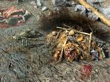 Гнездо когтей смерти
