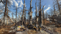 FO4FH Glowing Grove.png