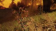 FO76 New flora blast zone 9