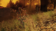 FO76 New flora blast zone 8