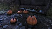 FO76 51020 Pumpkinpalooza
