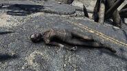 FO76 Huntersville (raider corpse)