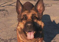 Dogmeat Fallout4.jpg
