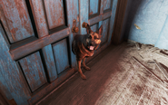 FO4 Bug Dogmeat