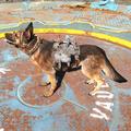 FO4 Лёгкая броня для собаки1