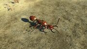 FO4NW Overgrown soldier ant.jpg