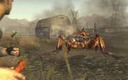 FNV Courier ant attacks with dynamite