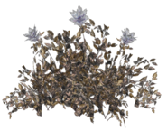 FO76 Toxic soot flower plant render 1