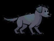 FOS Dog10