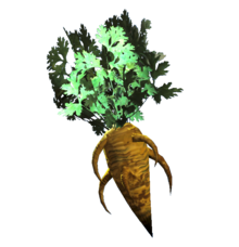 Fresh carrot.png