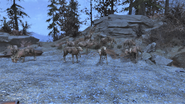FO76 So many deers