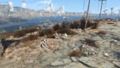 FO4NW A goods defense Synths