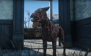 Fo4 RE wounded dog.jpg