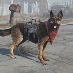 Dogmeat equipped items.jpg