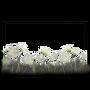 Atx photomode frame florawildcarrot l.webp