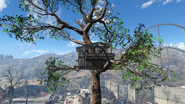 Cappys treehouse