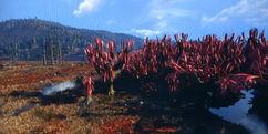 CranberryBog-Fallout76.jpg