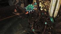 FO76 Fever blossom plant 8
