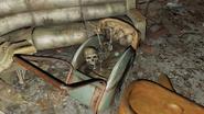 Mass Bay skeleton