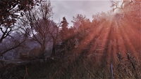 FO76 Magnificent Forest