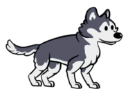 FOS Dog5