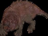 FO76 creature molerat 02