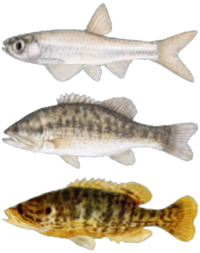 FNV Fishes.png