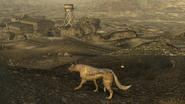 FNV Coyote den 5