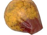 Wendigo colossus vocal sac