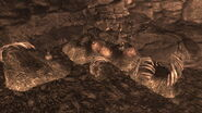 FNV Pile of deathclaw eggs on Deathclaw promontory