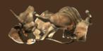 Brahmin armor