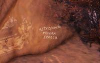 FO76WL Seneca Rocks panda 2