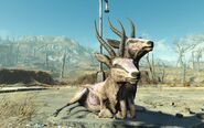 FO4NW Exterior 109
