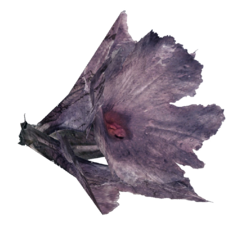 Melon blossom (Fallout 76).png