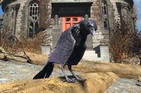 FO4 Crow