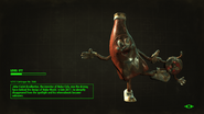 FO4NW Bottle and Cappy Loading Screen