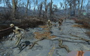 FO4 Herd of ghouls